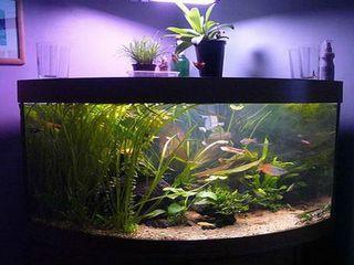Бизнес идеи аквариум открыть автомагазин бизнес план